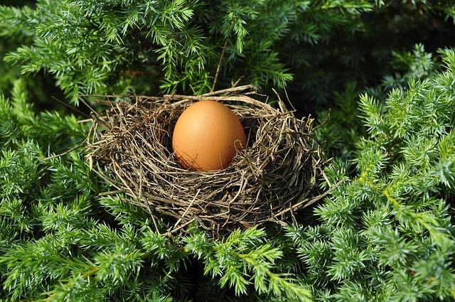 El huevo celebra su día mundial